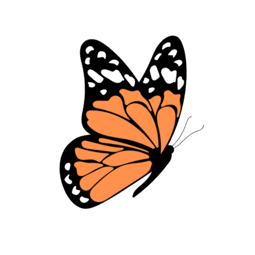 butterfly decorative image